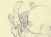 5-month-fetus