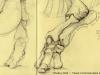 toxodon-platensis-09-05-09